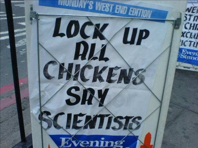 Scientists hate chickens