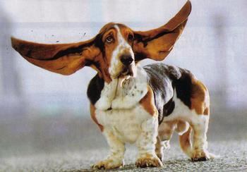 earspancrop.jpg