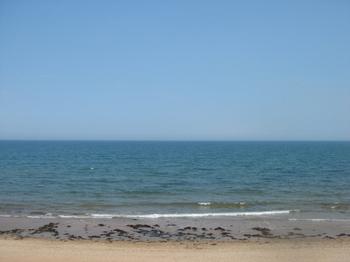 Pelamis_sea